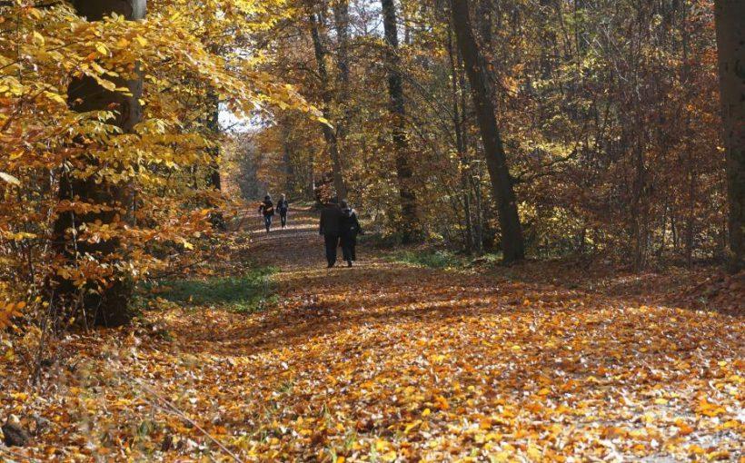 Herbstlaub Blätter Daniela Tröger ThüringenForst