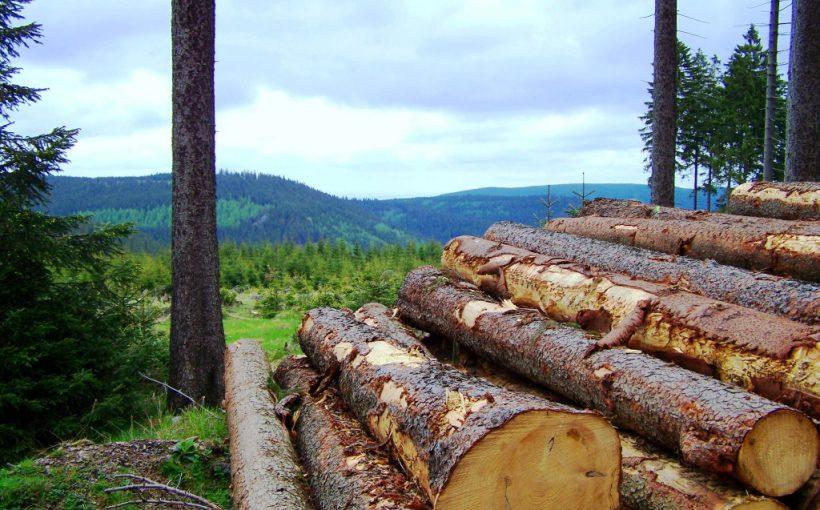 Holz für Zellulose 3D-Druck
