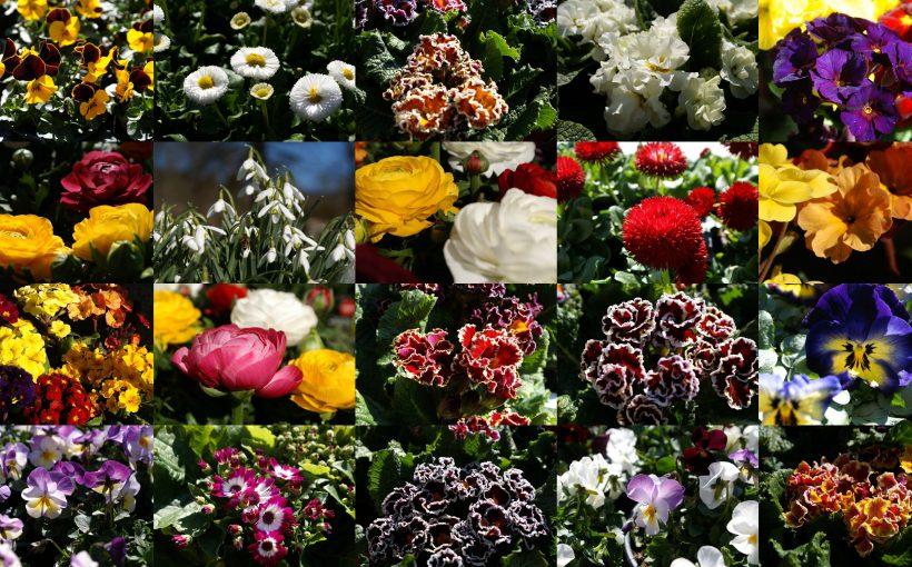 Blumencollage März Frank Schwabe