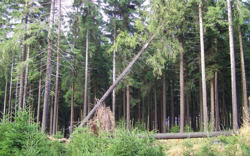 Windwurf Sturm Forst Horst Sproßmann