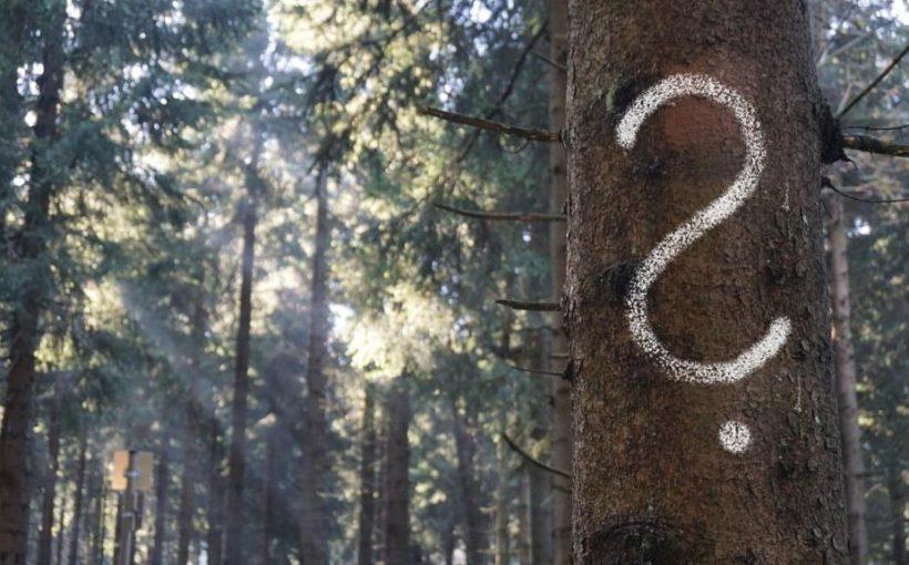 Baum mit Fragezeichen_DanielaTröger_xx