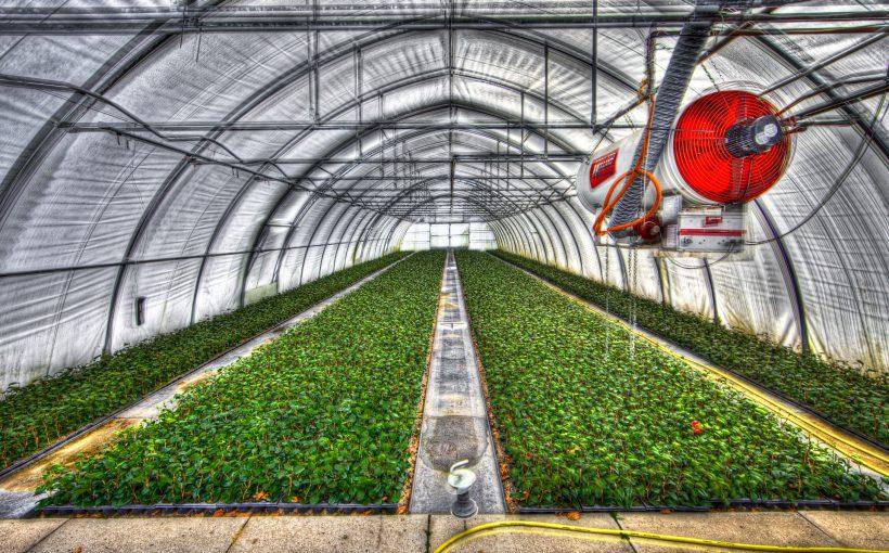 greenhouse-2546692_1920 Alfred Derks auf Pixabay
