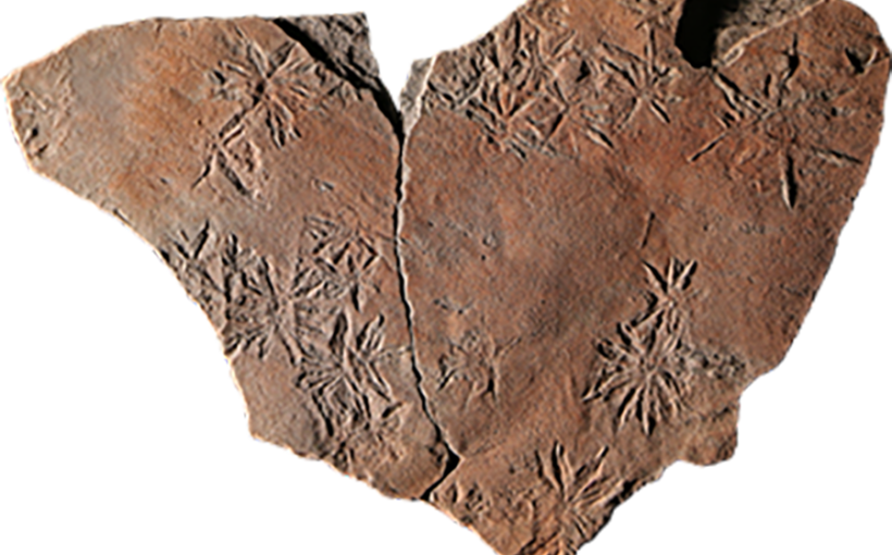 Fossile Eiskristalle
