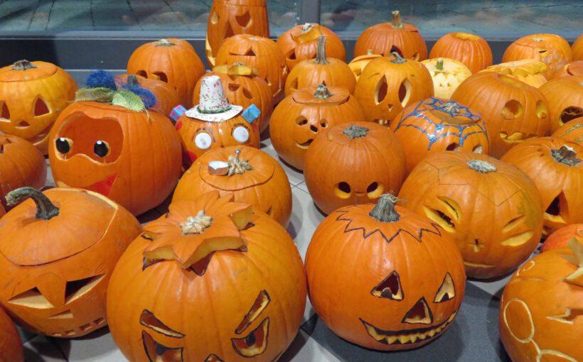 Kürbisse Halloween Steffi Seidel